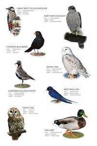 all bird names images
