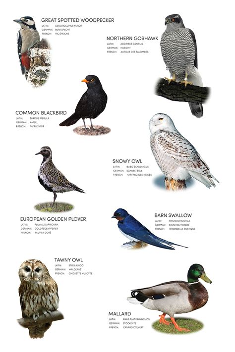 bird images with names