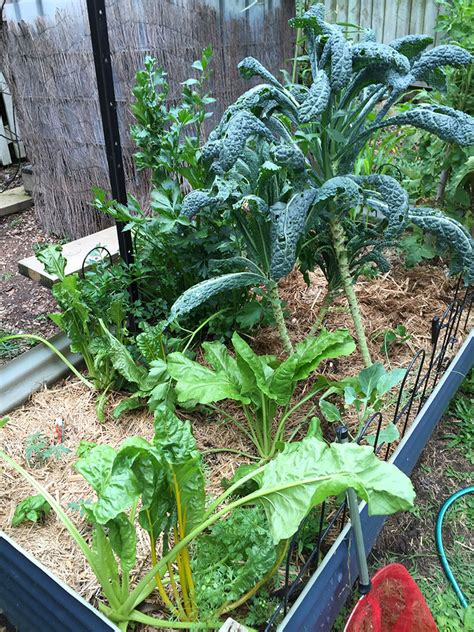 what is the best mulch for a vegetable garden what mulch is best for your vegetable patch of dirt