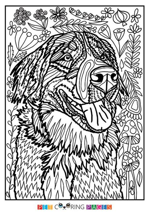 dog coloring page for adults 2377 best coloring pages images on pinterest