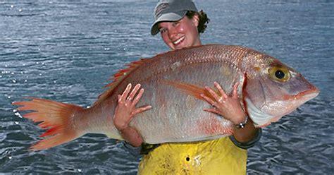 Serokan Ikan Saringan Ikan Gagang Sumpit mancing mania tips dan trik belajar mancing