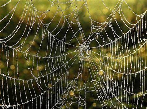 Garden Spider Features How A Spider S Web Could Help To Design The Fail Safe