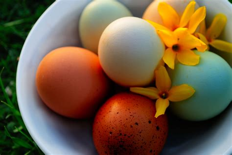 colored eggs three ways to dye eggs my pet chicken