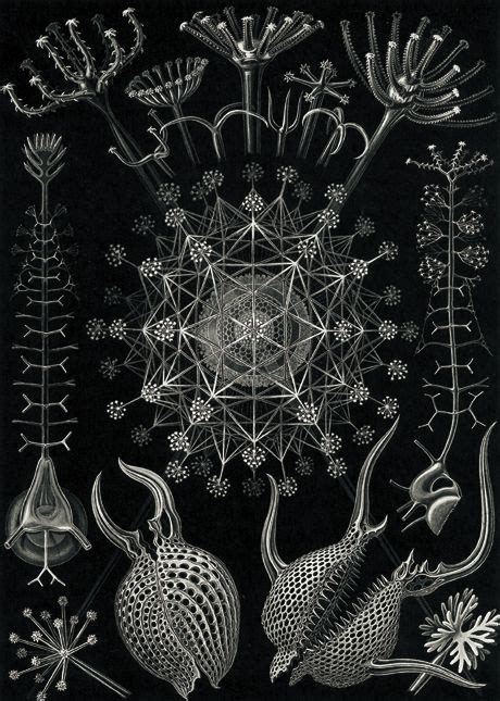 Cabinet Ernst by Cabinet Ernst Haeckel And The Microbial Baroque
