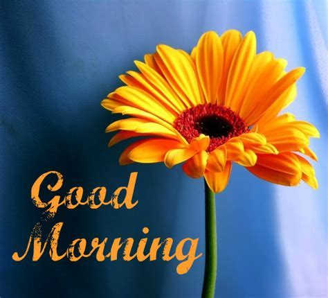 A Fresh Good Morning. Free Good Morning eCards, Greeting