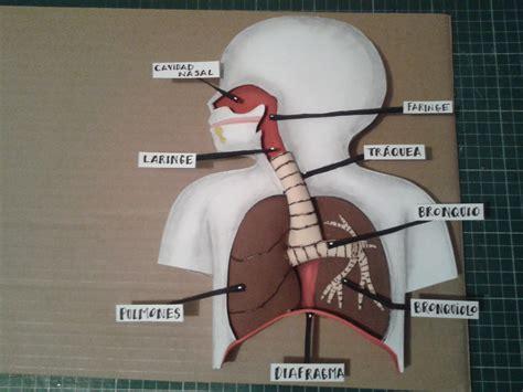 Como Hacer Una Maqueta Del Sistema Respiratorio | como hacer maqueta aparato respiratorio 1 doovi