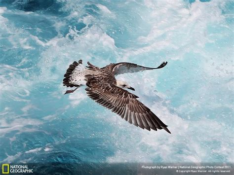 wallpaper mac national geographic download hundreds of breathtaking national geographic