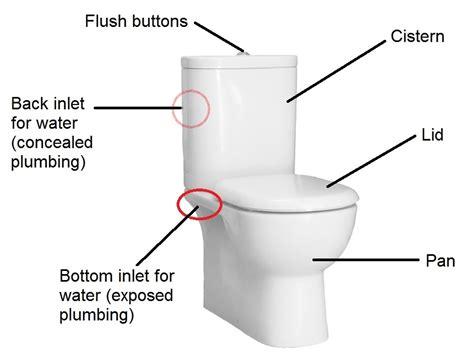 Plumbing Qualifications Australia by Toilet Plumbing Diagram Australia Periodic Diagrams Science