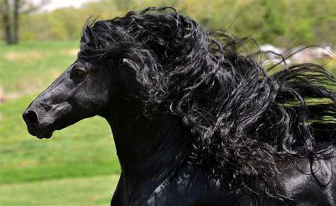imagenes del negro videla imagenes fotos del caballo m 225 s hermoso del mundo