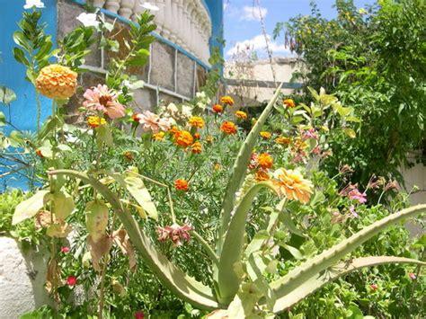 common garden plants photo