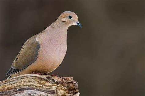 6 common birds found in trinidad tobago life in trinidad