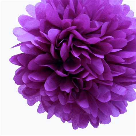 purple pomeranian purple supplies