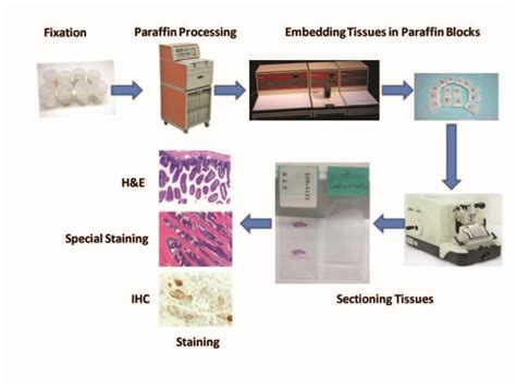 services vitrovivo biotech llc