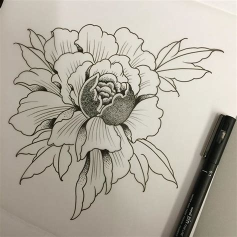 peony art flower illustration on instagram