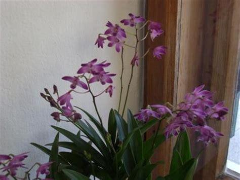 Die Schönsten Orchideen 3947 by Orchideen Sorten Bilder Orchideen Vielfalt Gartencenter