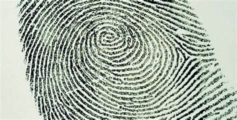 No Fingerprints No Criminal Record Fingerprint Analysis Introduction