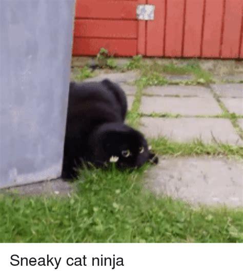Sneaky Cat Meme - sneaky cat ninja funny meme on me me