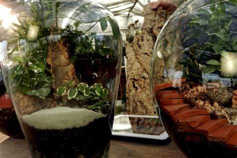 terraglas eco friendly terrarium solutions ubloom