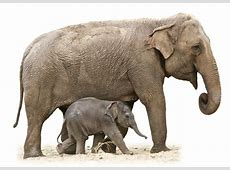 Animal Elephant and baby png #43224 - Free Icons and PNG ... Free Baby Related Clipart