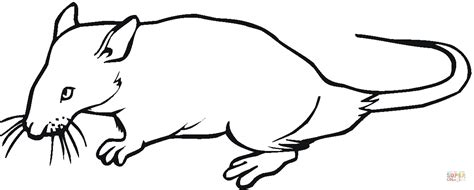 rat 14 coloring page free printable coloring pages