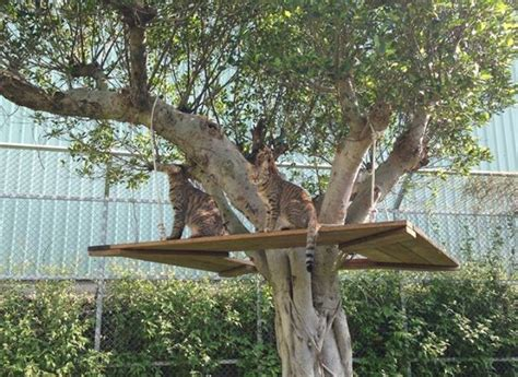 cat tree house cat tree house from catswall design diy cat enclosures pinterest