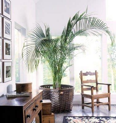 tastefully bringing animal inspiration into your interiors potted palm in large basket for the yard pinterest