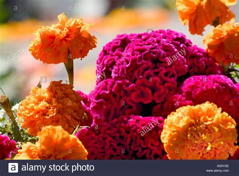 Pdf Flowers Dia De Los Muertos by Up Of Flowers Used To Bring Back The Dead For Dia De