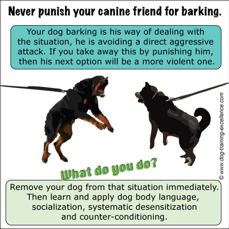 how to your to stop barking on command what to do if your is barking obsessively when you how to stop barking dogs tutorial