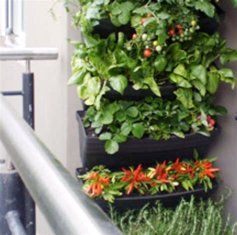 Vertical Indoor Vegetable Garden Nature As And Inspiration Mageau