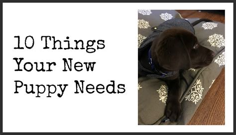 things needed for a new puppy grace and josie 10 things your new puppy needs