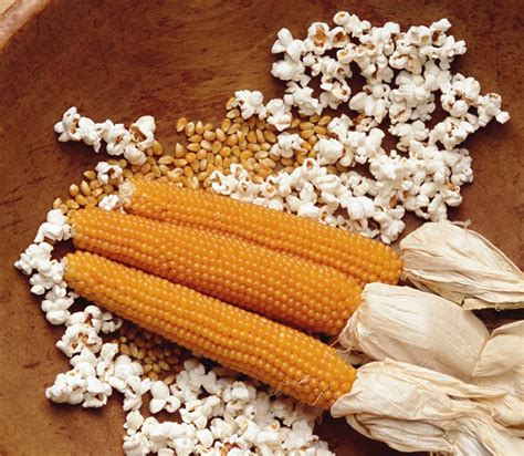 Wine Bottle Home Decor Grow Your Own Popcorn Corn Plants The Green Head