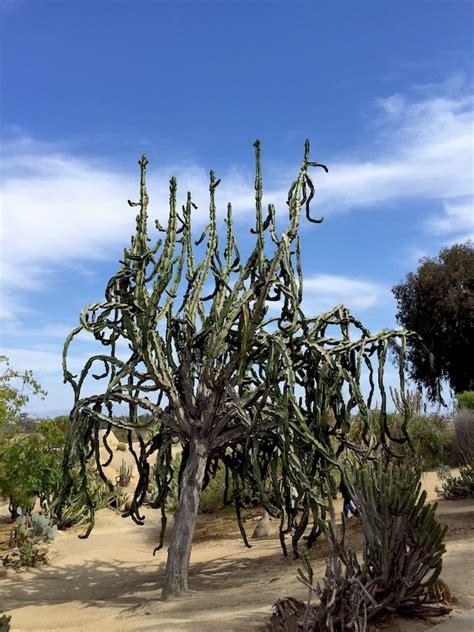 the balboa park cactus garden my socal d life