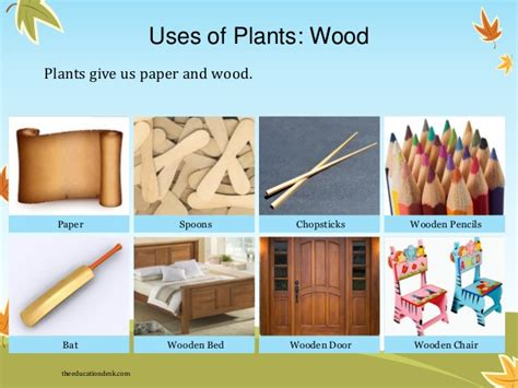 What Type Of Tree Is Used To Make Paper - what type of tree is used to make paper 28 images