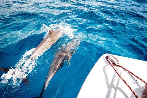 my zanzibar from idyllic to upheaval books experience swimming with dolphin in zanzibar of safari