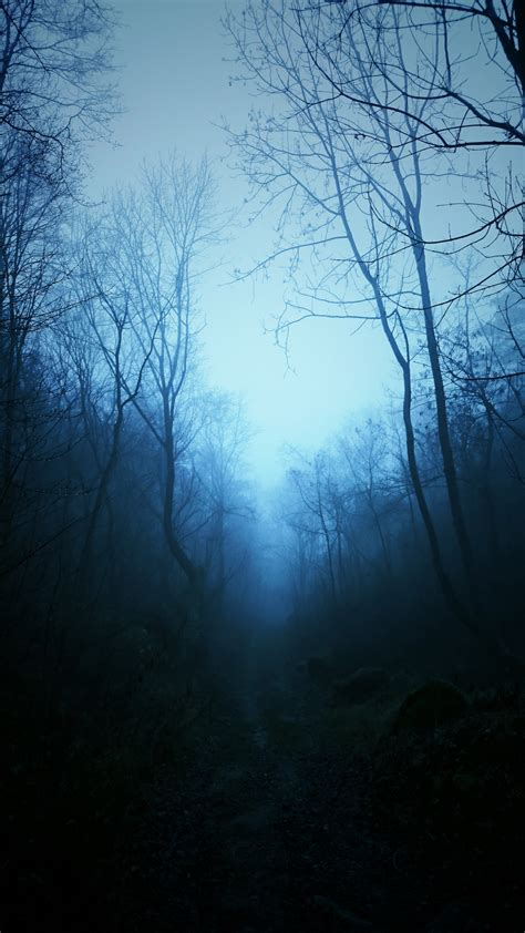 mist nature dark blue trees tropical forest forest