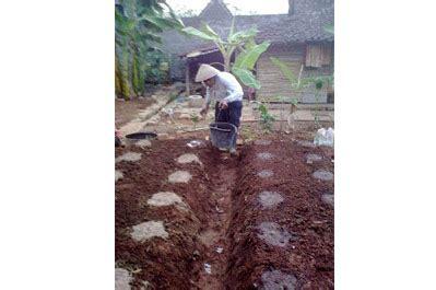 Pupuk Guano 1kg By Cintani bunga kol dari gunung tandus javamas agrophos