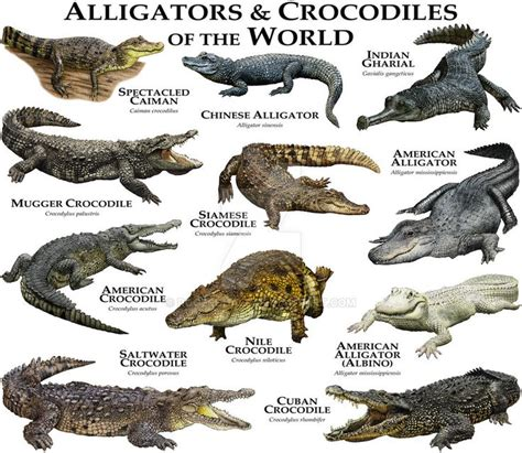 i mammal the story of what makes us mammals books 25 best ideas about alligators on crocodiles