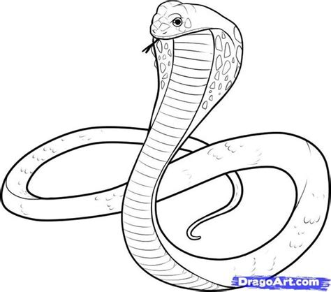 Coloring Pages King Cobra | snake drawings for kids king cobra coloring pages