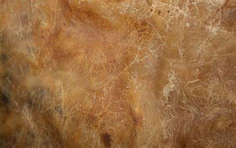 Sofa Leather Covers 40 Free High Quality Leather Textures For Designers