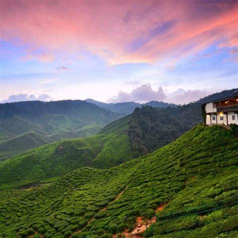 unique travel  cameron highlands malaysia blank