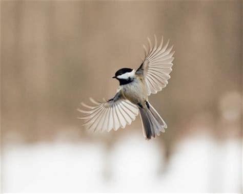oiseau vole joie des mots
