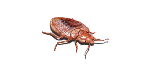 eliminating bed bugs how to eliminate bed bugs with heat treatment