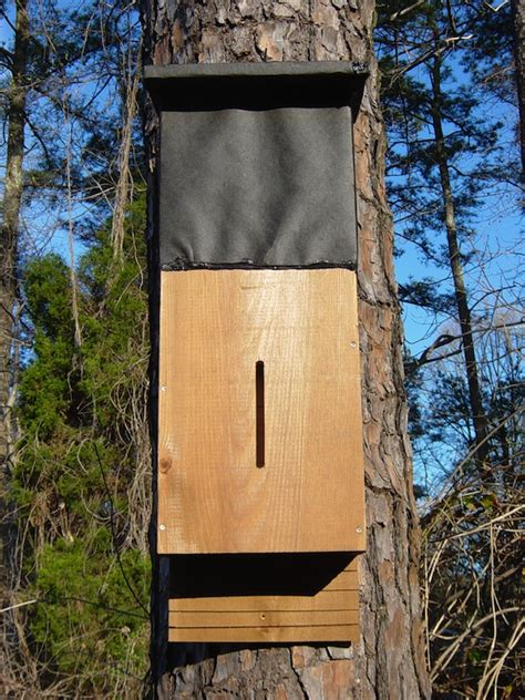 backyard bat house bat house cedar large 36 quot x 13 5 quot x 9 quot