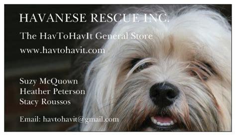 havanese shelter havanese rescue pet store diy