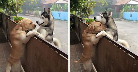 dog escapes backyard this dog felt so lonely that he escaped the yard to hug