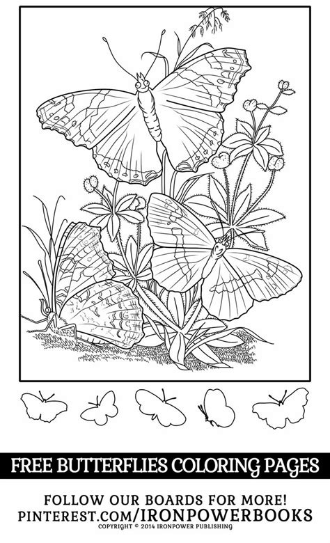 coloring pages free for commercial use 651 best a butterflies bugs images on pinterest