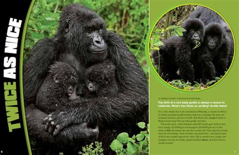 ranger rick i wish i was a gorilla i can read level 1 books 17 best images about ranger rick articles about wildlife
