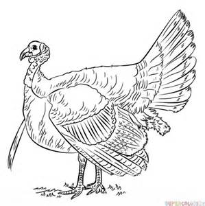 how to color a turkey how to draw a turkey step by step drawing tutorials