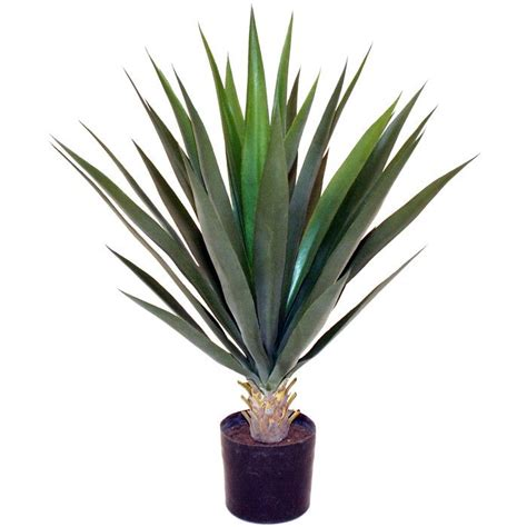 Tropical Yucca Plant by Best 25 Yucca Plant Ideas On