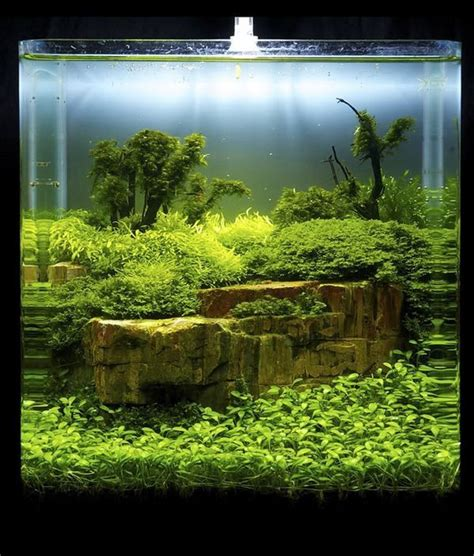aquascape fish 610 best images about aquarium on pinterest